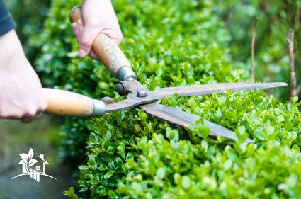 Garden Services Mansfield
